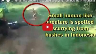 فيديو.. ظهور مفاجئ لقزم أسطوري في غابة