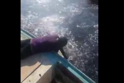 فيديو مذهل ولايصدق : الاسماك في متناول اليد على شواطئ عدن والصيادون يغرفونها بأياديهم