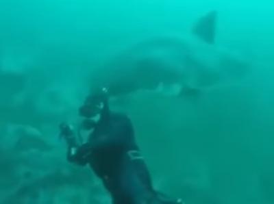 «قرش أبيض عملاق» ينتبه لتصويره فيفاجِئ الغواص بهجوم غير متوقع ويتراجع باللحظة الاخيرة (فيديو)