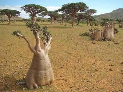 دولة أفريقية تستعد لانتزاع ملكية جزيرة سقطرى من اليمن وثغرة في القانون الدولي تدعم موقفها..!